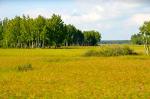 Sibirian Landscape