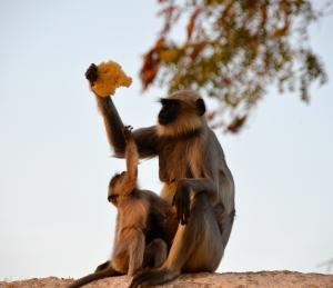 ...und immer wieder Affen!