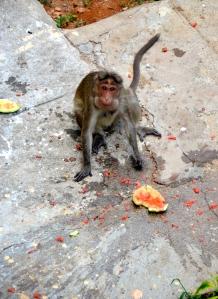 Blöder Affe mit UNSERER Melone!