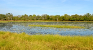 Window to Wetlands (Northern Territory)